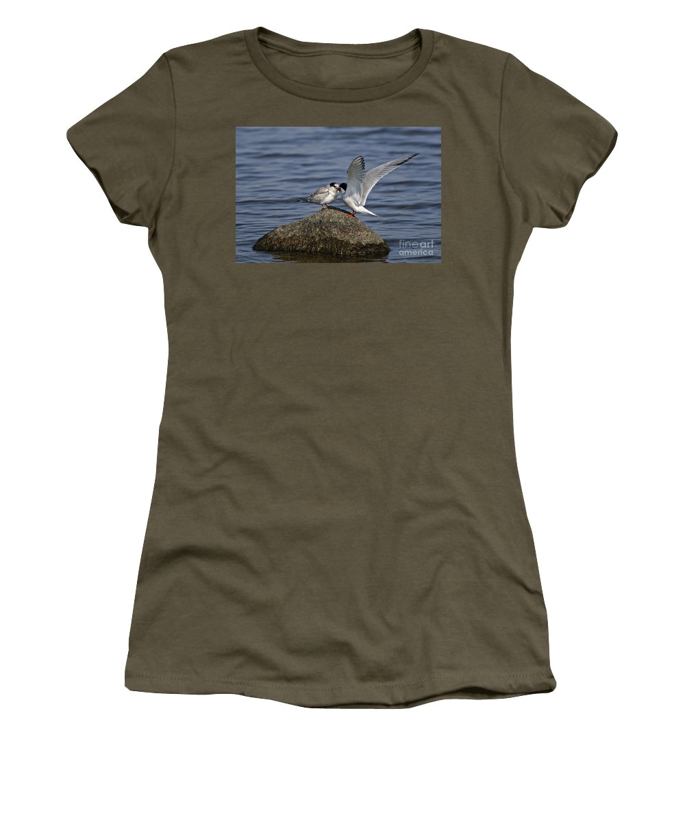 Common Tern Women's T-Shirt featuring the photograph Common Tern Pictures 48 by World Wildlife Photography