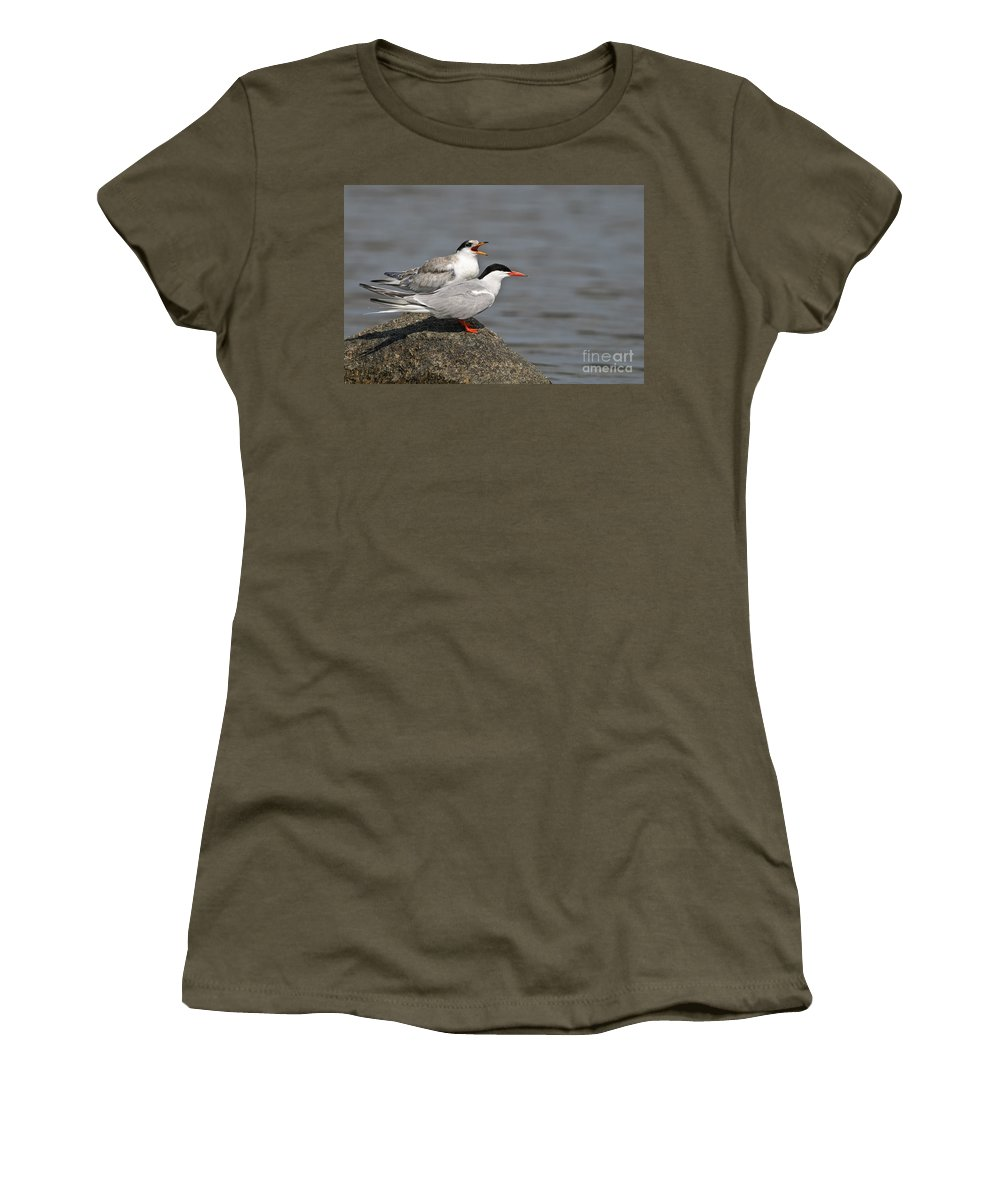 Common Tern Women's T-Shirt featuring the photograph Common Tern Pictures 76 by World Wildlife Photography