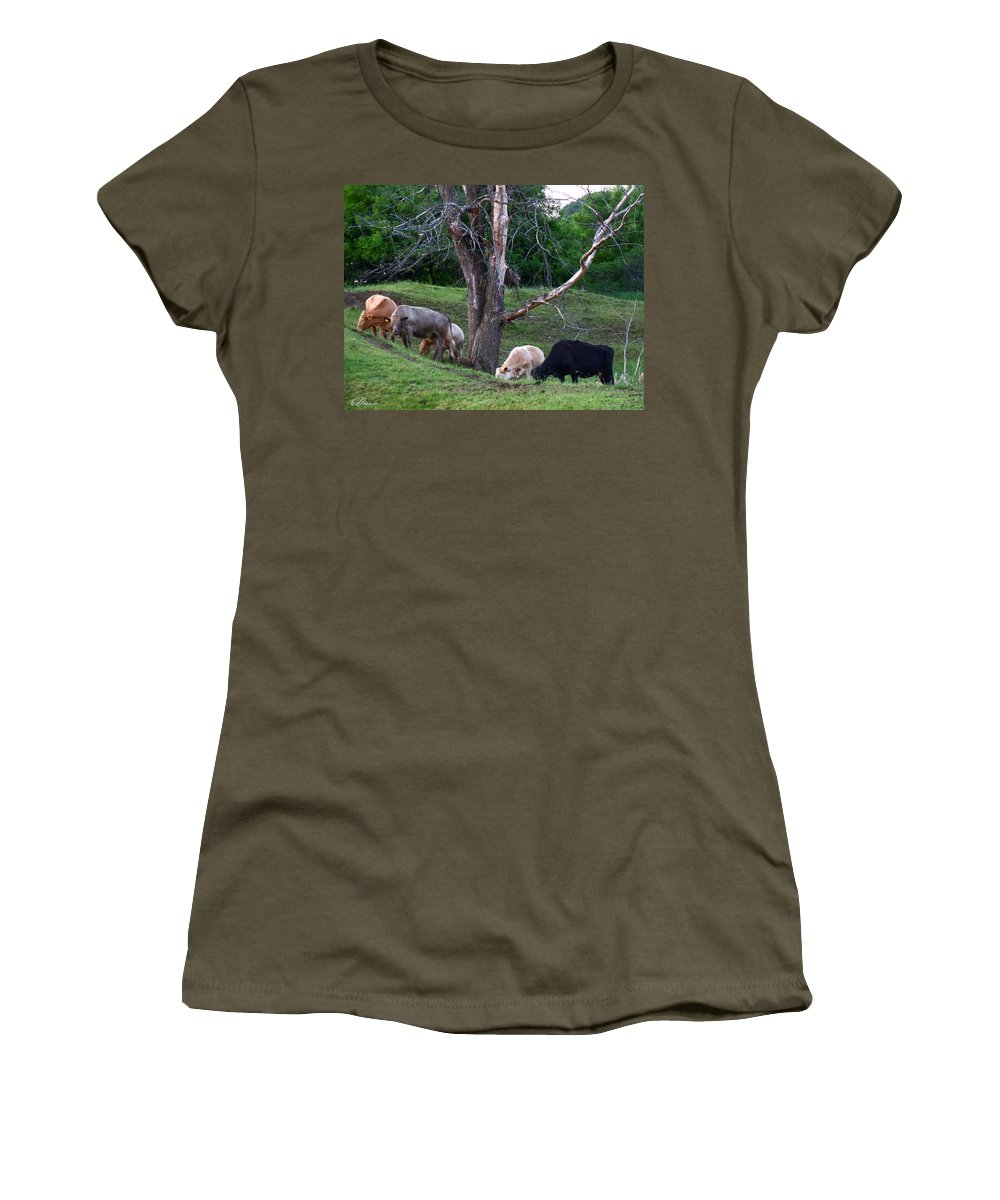 Cows Women's T-Shirt featuring the photograph Cows Of Color by Nancy Griswold