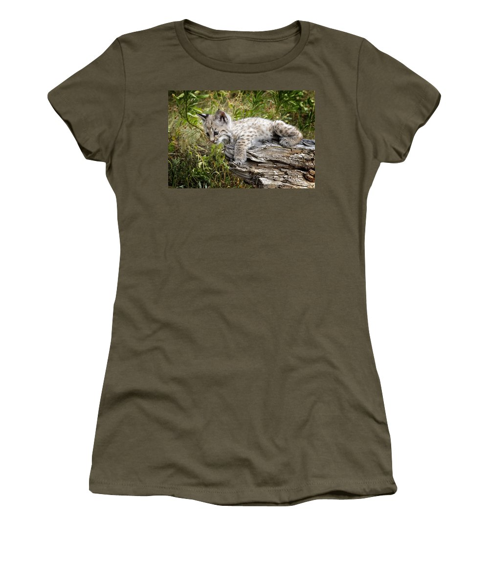 Bobcat Women's T-Shirt featuring the photograph Curiosity by Elaine Haberland