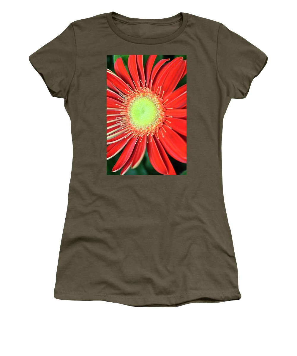 Gerber Women's T-Shirt featuring the photograph Dsc437d by Kimberlie Gerner