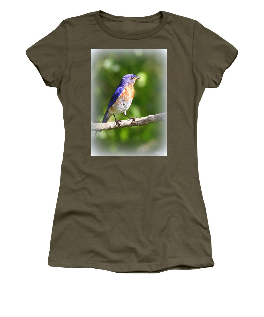 Eastern Bluebird Women's T-Shirt featuring the photograph Eastern Bluebird - After His Bath by Travis Truelove