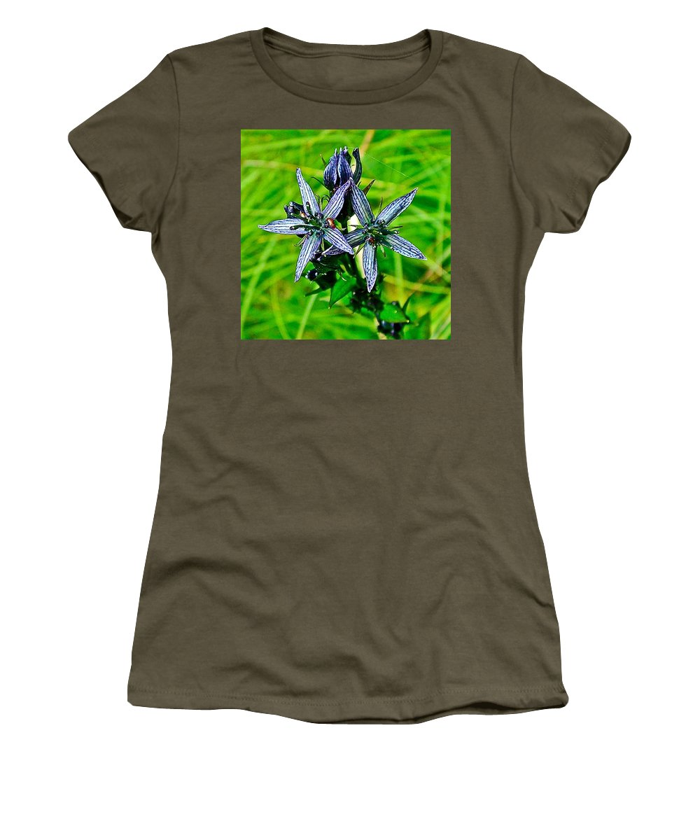 Felwort Or Star Gentian On Otter-bahn Trail In Seldovia Women's T-Shirt (Athletic Fit) featuring the photograph Felwort Or Star Gentian On Otter-bahn Trail In Seldovia-alaska by Ruth Hager
