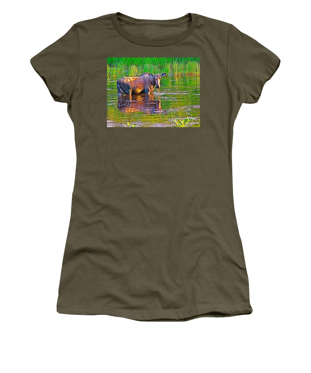 Female Moose Near Airport In Chicken Women's T-Shirt featuring the photograph Female Moose Near Airport In Chicken-alaska  by Ruth Hager