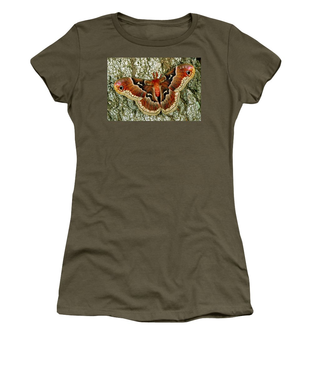 Promethea Moth Women's T-Shirt featuring the photograph Female Promethea Moth by Millard H Sharp