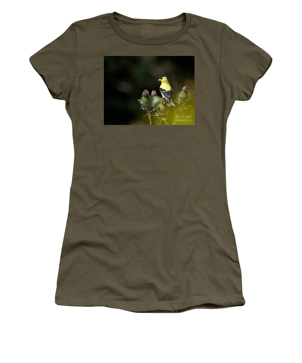 Finch Women's T-Shirt featuring the photograph Finch In The Thistles by Cheryl Baxter