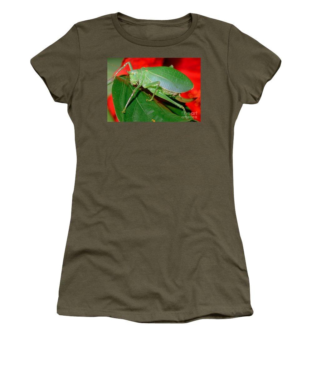 Fauna Women's T-Shirt featuring the photograph Fork-tailed Bush Katydid by Millard H. Sharp