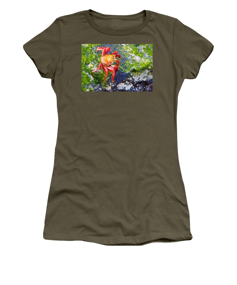 Galapagos Women's T-Shirt featuring the photograph Galapagos Sally Lightfoot Crab by Allan Morrison