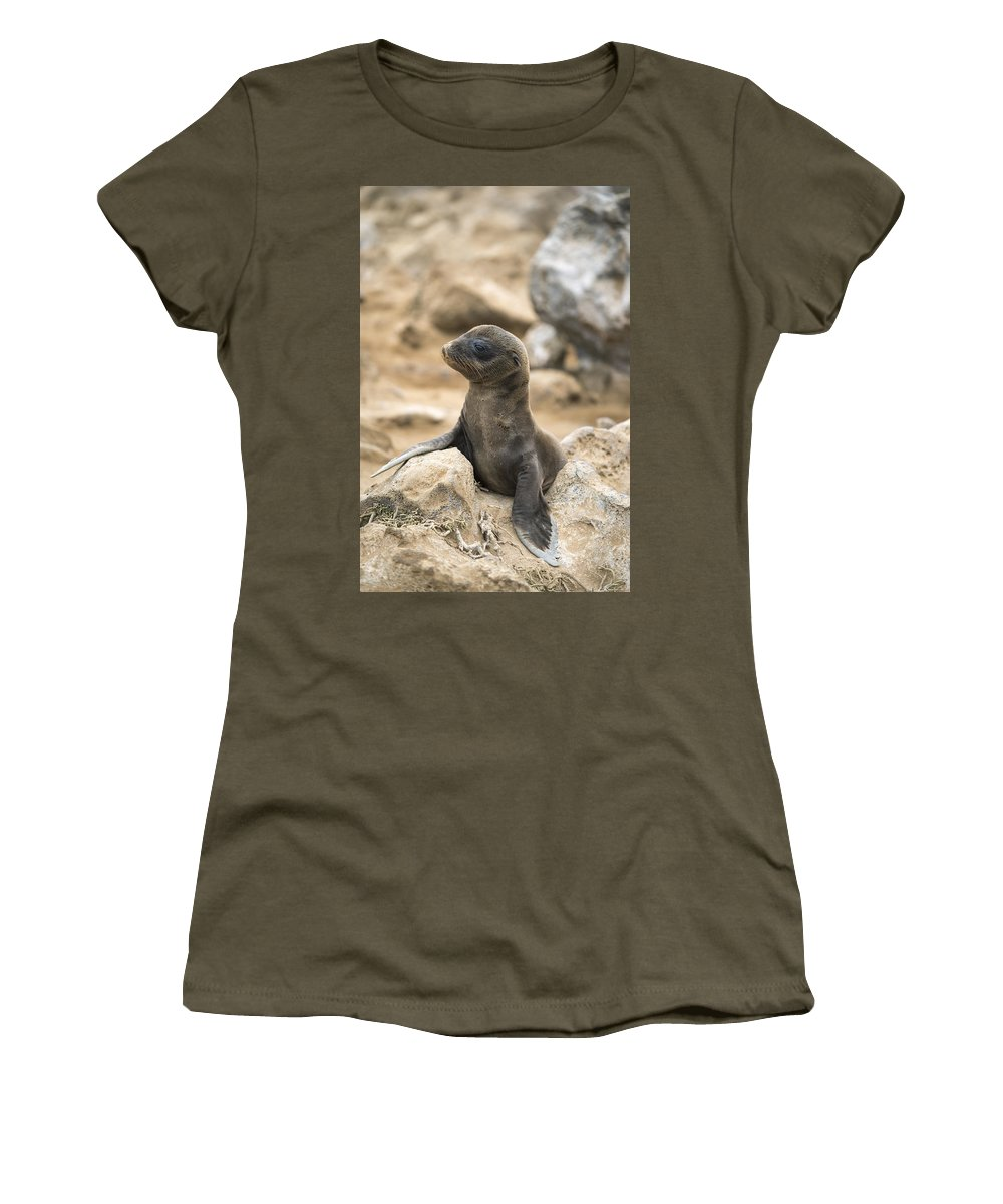 Tui De Roy Women's T-Shirt featuring the photograph Galapagos Sea Lion Pup Champion Islet by Tui De Roy