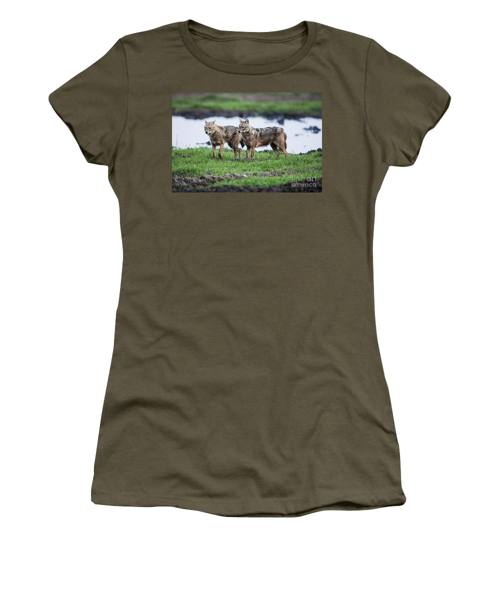 Golden Jackal Women's T-Shirt featuring the photograph Golden Jackal Canis Aureus by Eyal Bartov