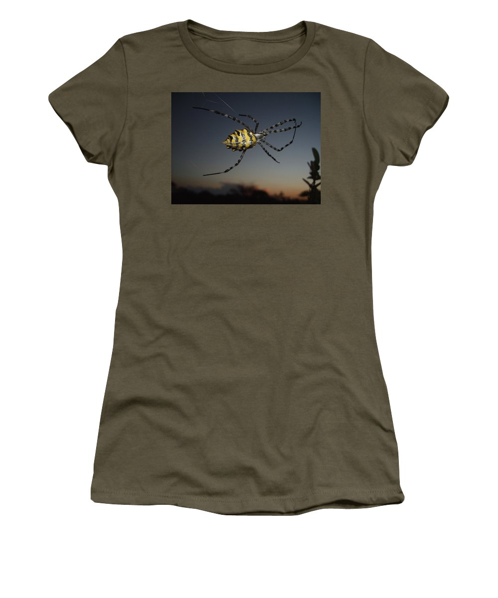 Spider Women's T-Shirt featuring the photograph Golden Orb Web Spider by Tracey Beer
