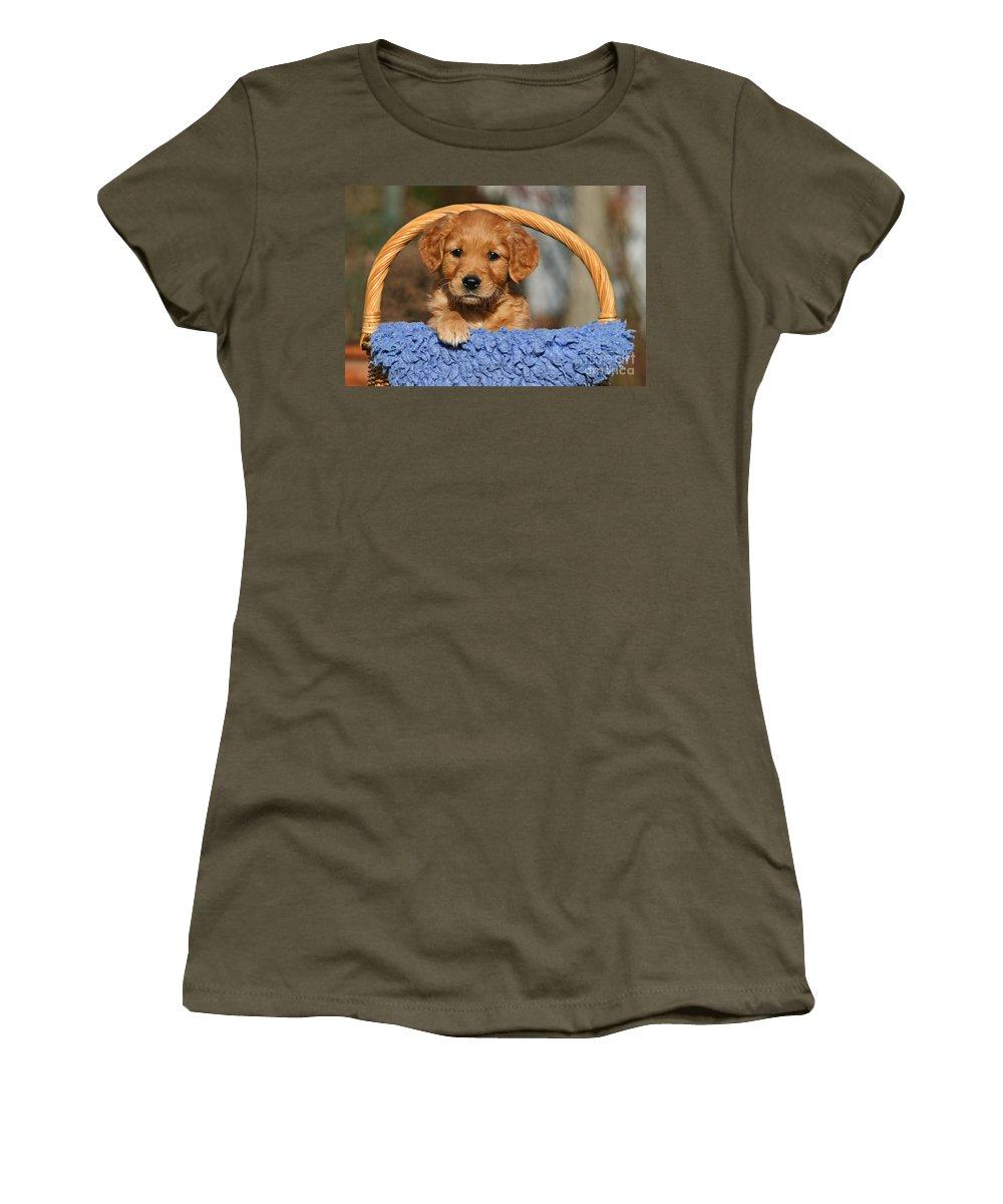 golden Retriever Women's T-Shirt featuring the photograph Golden Retriever Puppy In A Basket by Dog Photos