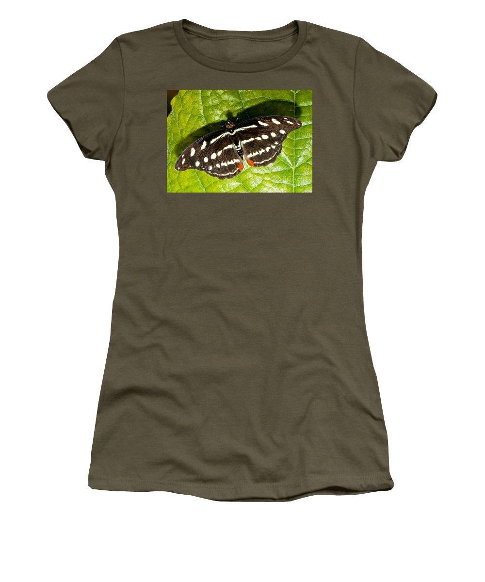 Tropical Butterfly Women's T-Shirt featuring the photograph Grecian Shoemaker Butterfly by Millard H. Sharp