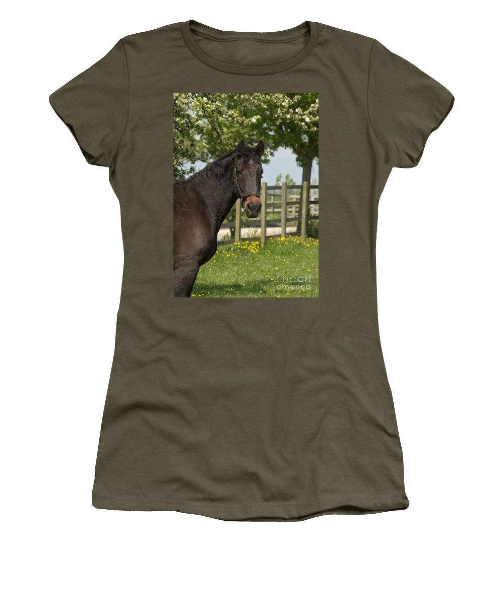 Horse Women's T-Shirt featuring the photograph Horse In Spring by Linsey Williams