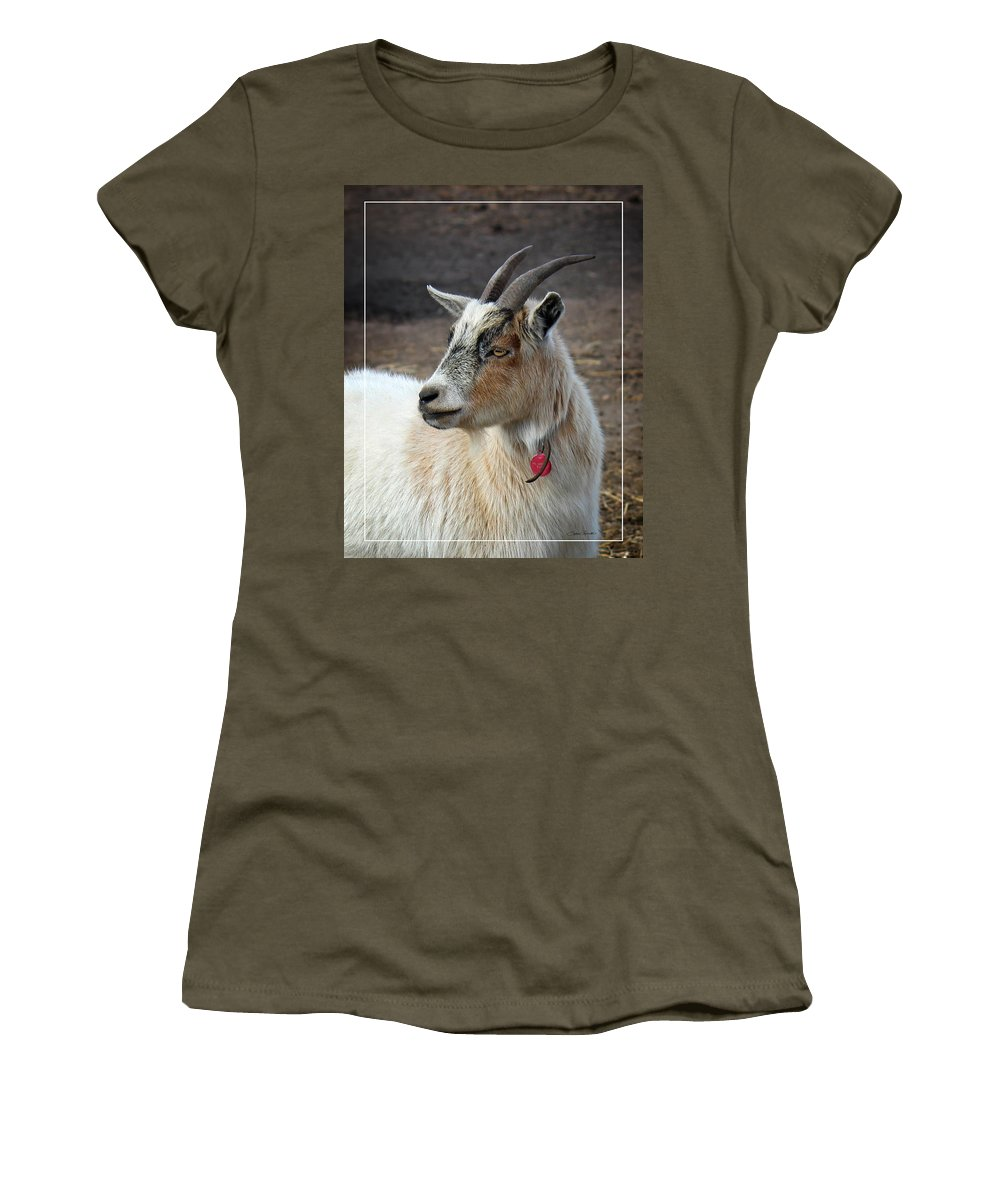 Pygmy Goat Women's T-Shirt featuring the photograph Ivy by Sylvia Thornton
