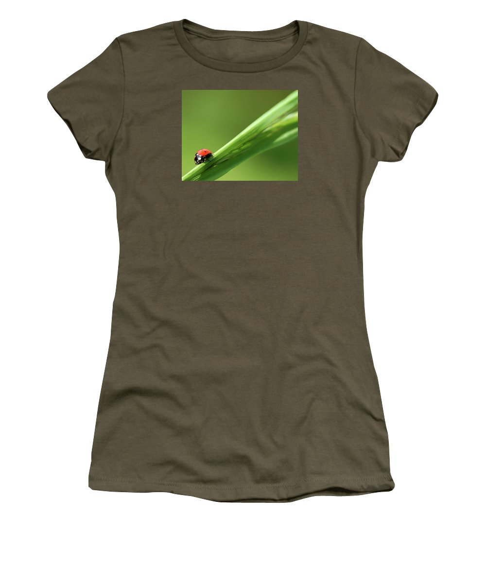 Ladybird Women's T-Shirt featuring the photograph Ladybird On Green Leaf by Cliff Norton