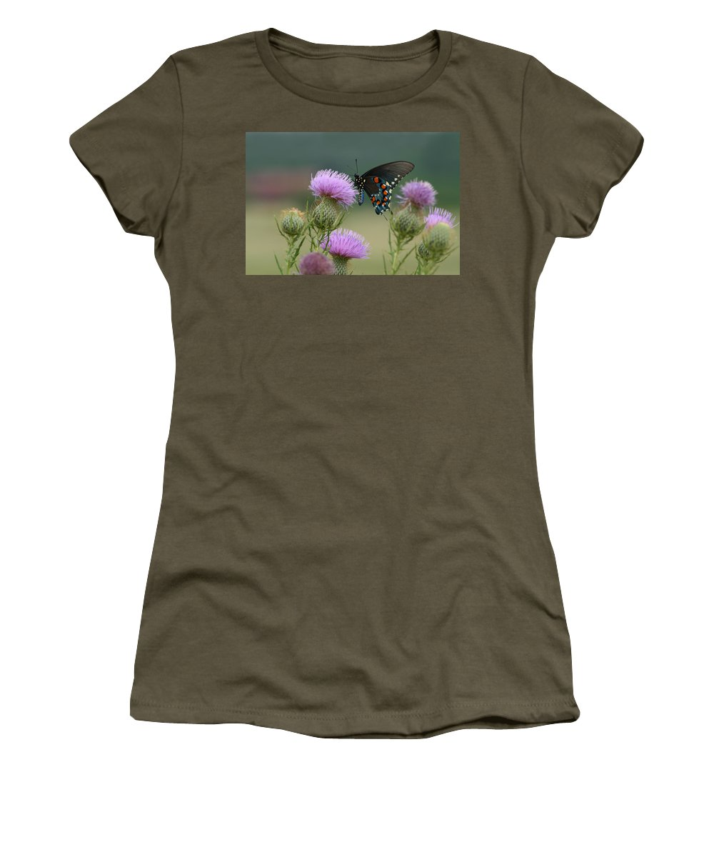 Battus Philenor Women's T-Shirt featuring the photograph Lavender Thistle And Pipevine Swallowtail Butterfly by Kathy Clark