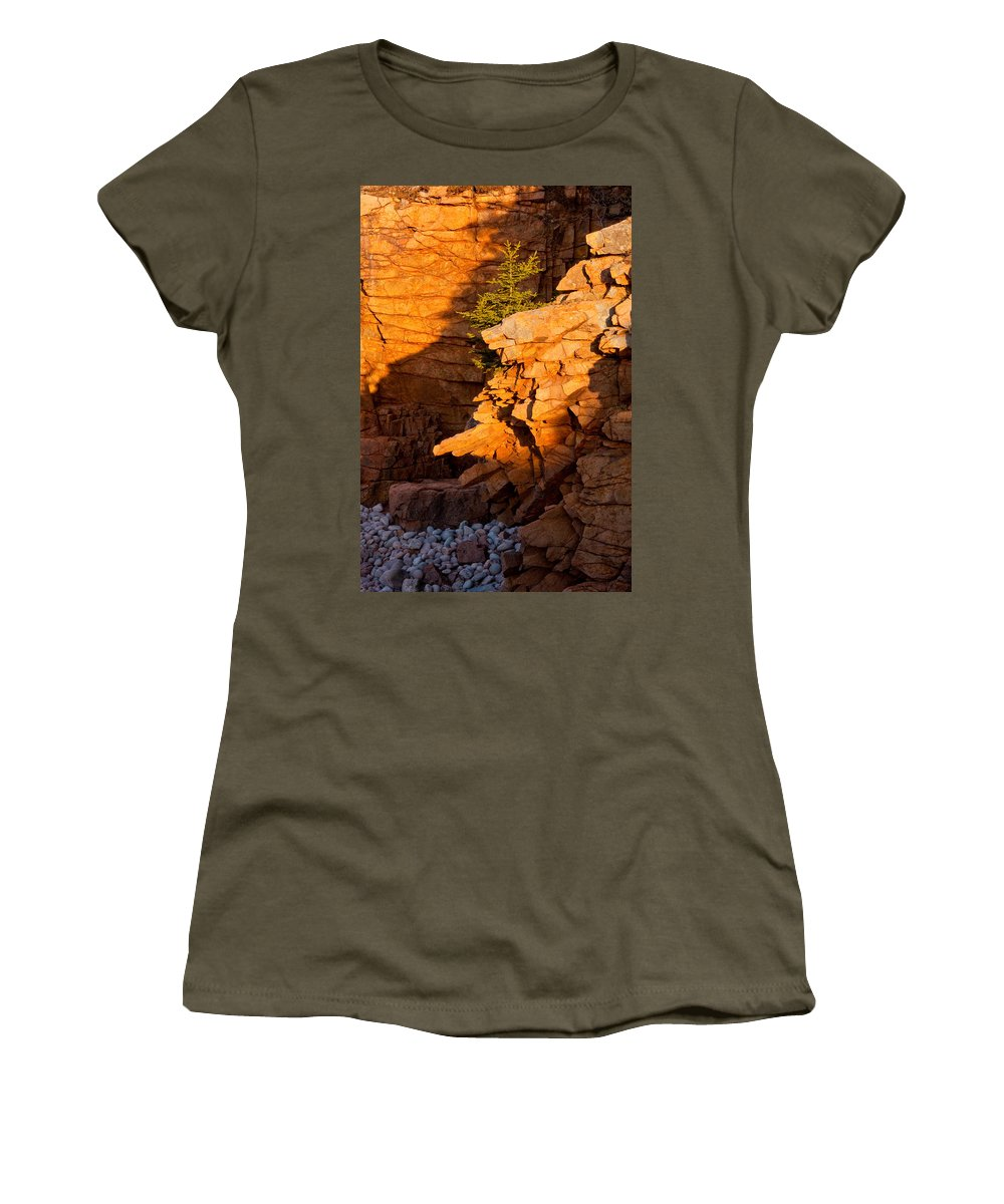 Acadia National Park Women's T-Shirt featuring the photograph Lone Pine 2621 by Brent L Ander