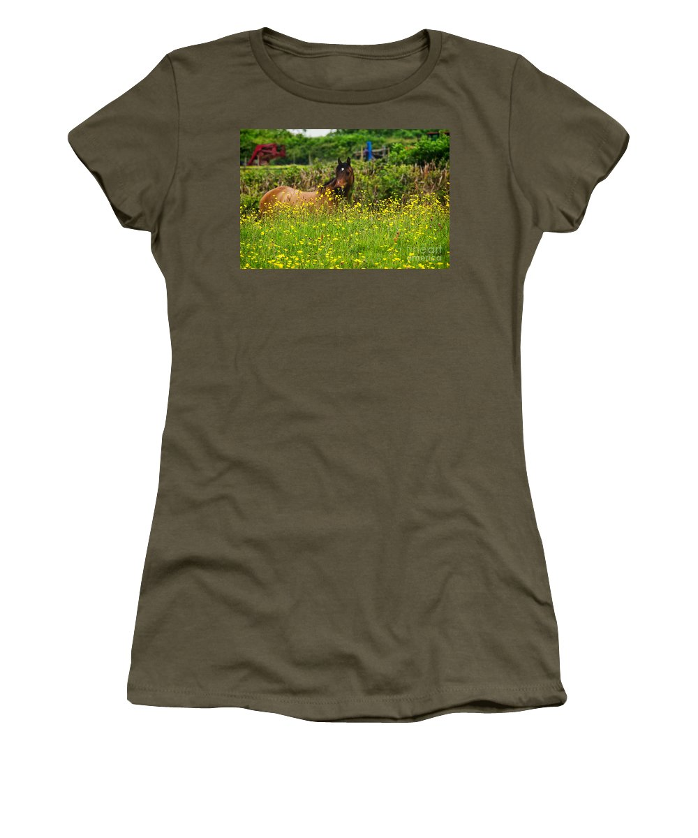 Horse Women's T-Shirt featuring the photograph Lost In Buttercups by Susie Peek