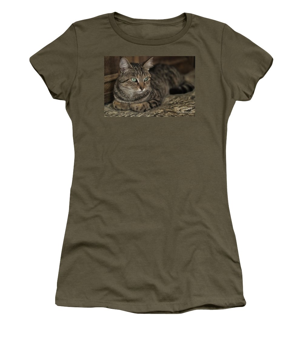 Cat Feline Women's T-Shirt featuring the photograph Lounging Cat by Brothers Beerens
