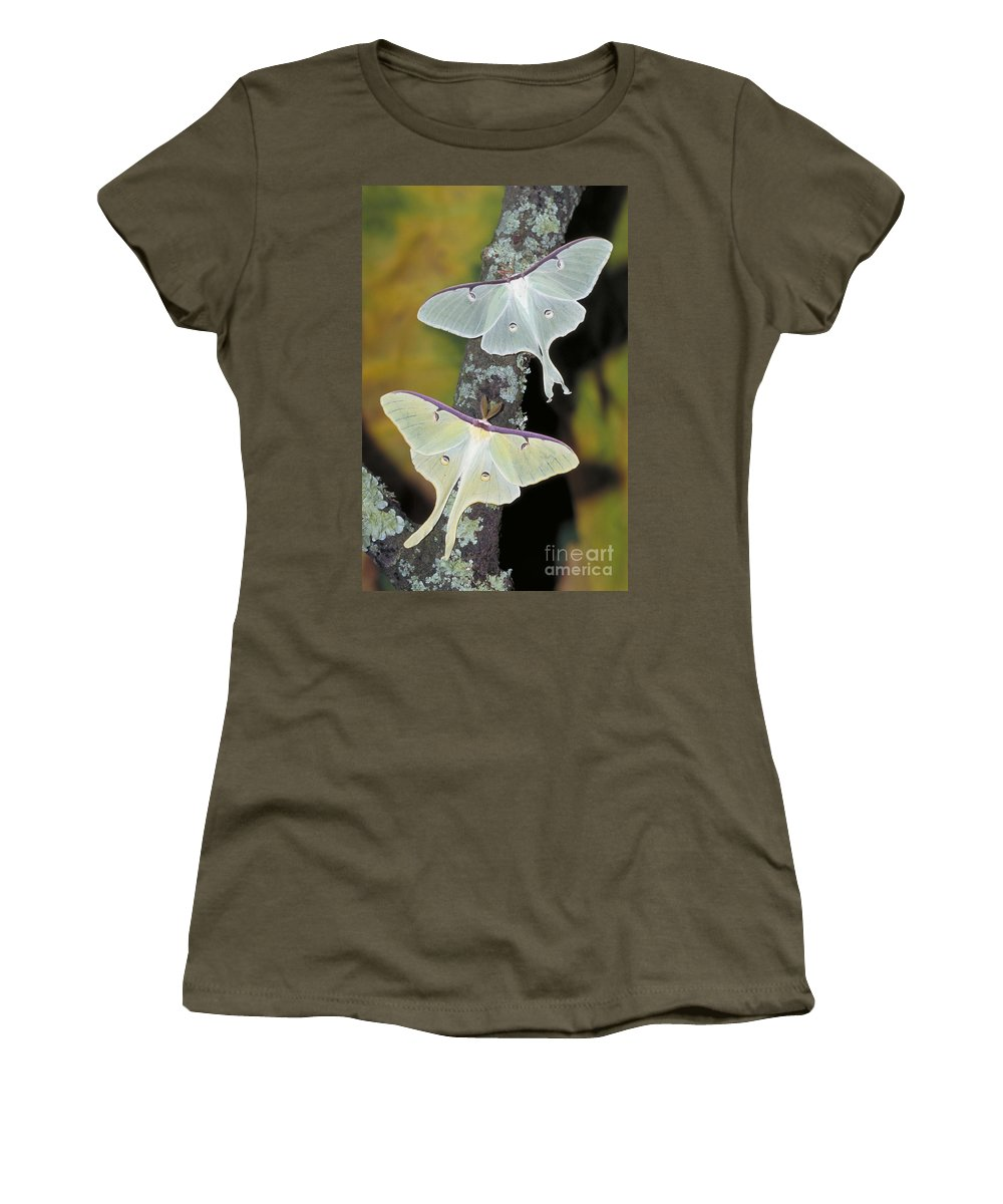 Animal Women's T-Shirt featuring the photograph Luna Moth by Millard H. Sharp