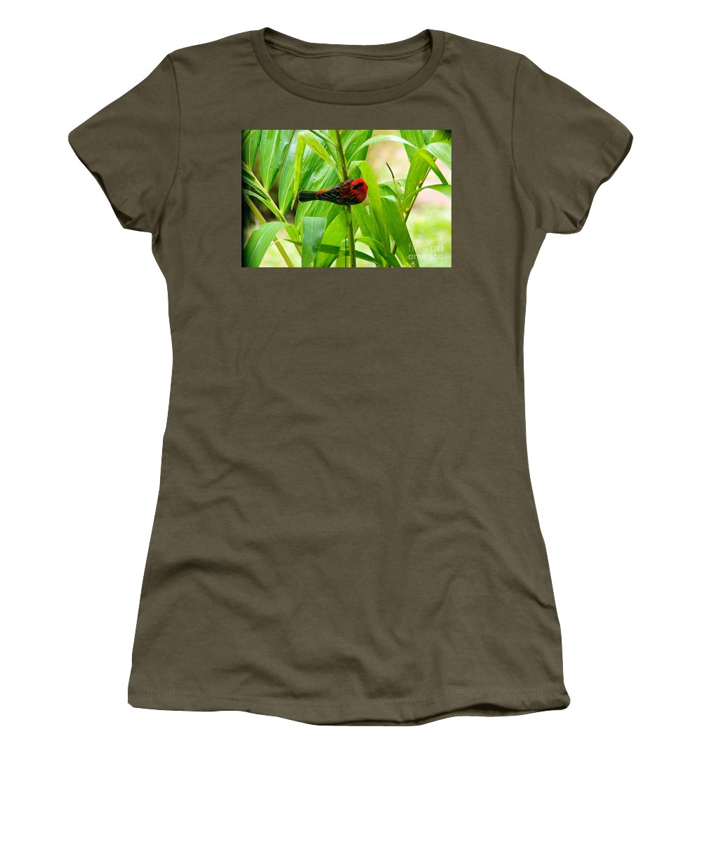 Nature Women's T-Shirt featuring the photograph Madagascar Fody On Palm Tree by Tim Holt