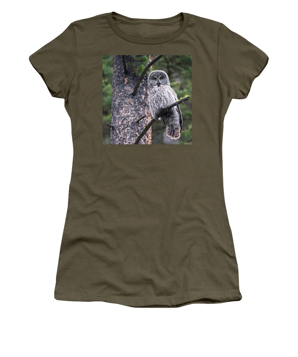 Great Gray Owl Women's T-Shirt featuring the photograph Male Great Gray Owl by Max Waugh