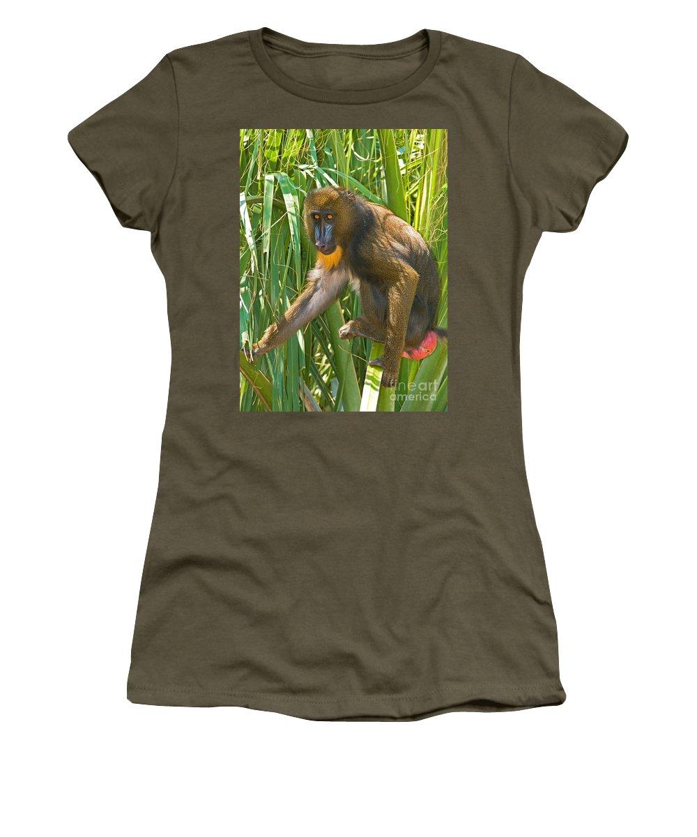 Nature Women's T-Shirt featuring the photograph Mandrill Female by Millard H. Sharp