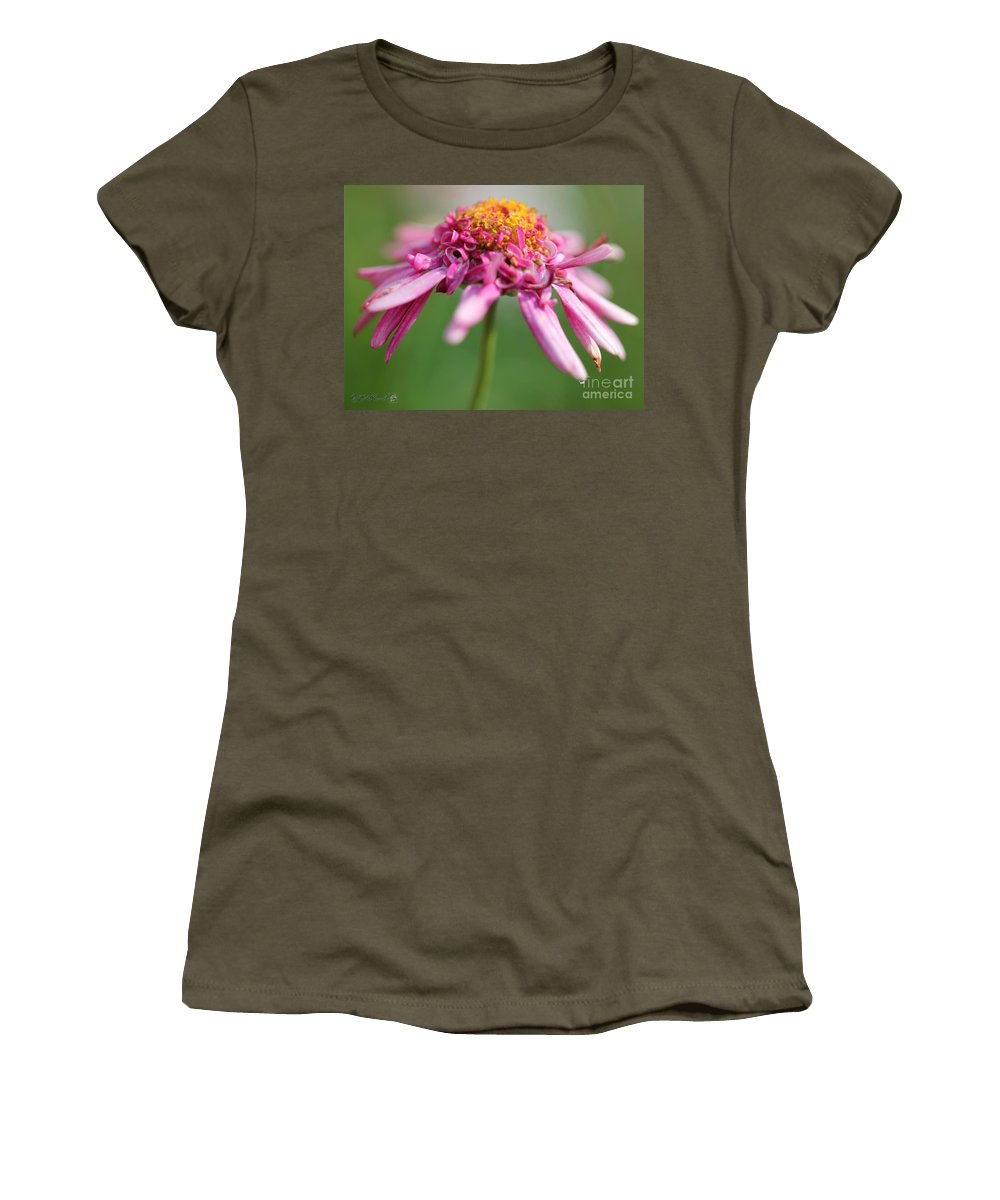 Mccombie Women's T-Shirt featuring the photograph Marguerite Daisy Named Summer Song Rose by J McCombie