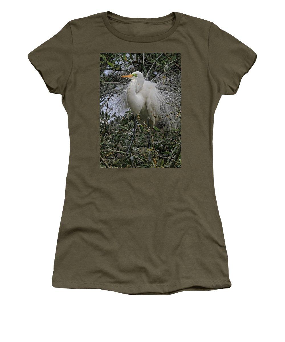 Egret Plummage Women's T-Shirt featuring the photograph Mating Plumage by Deborah Benoit