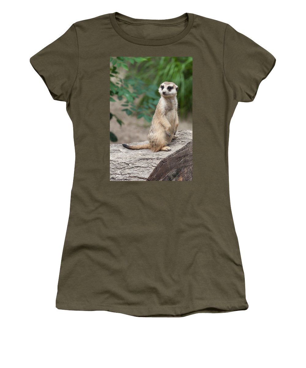 Meerkat Women's T-Shirt (Athletic Fit) featuring the photograph Meerkat by Shirley Radabaugh