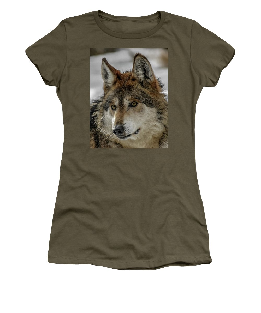 Wolf Women's T-Shirt featuring the photograph Mexican Grey Wolf Upclose by Ernie Echols