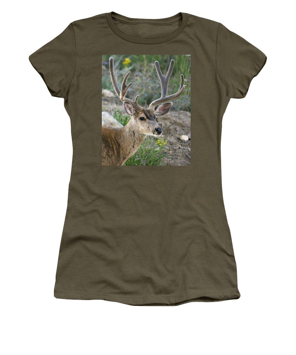 Mule Deer Buck In Velvet Women's T-Shirt featuring the photograph Mule Deer Buck In Velvet by Gary Langley