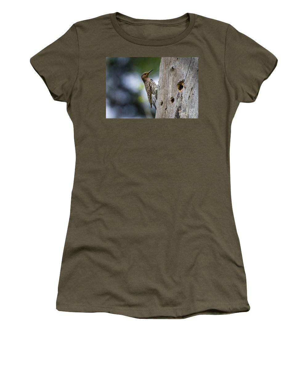 Northern Flicker Women's T-Shirt featuring the photograph Northern Flicker Pictures 35 by World Wildlife Photography