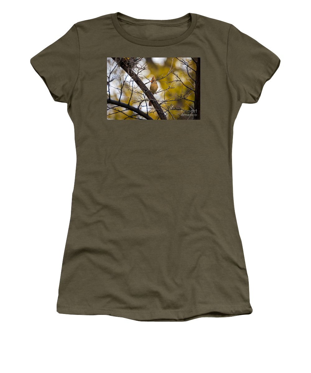 Tree Women's T-Shirt featuring the photograph November Cardinal by M Dale
