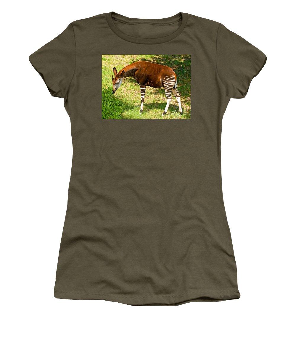 Nature Women's T-Shirt featuring the photograph Okapi by Millard H. Sharp