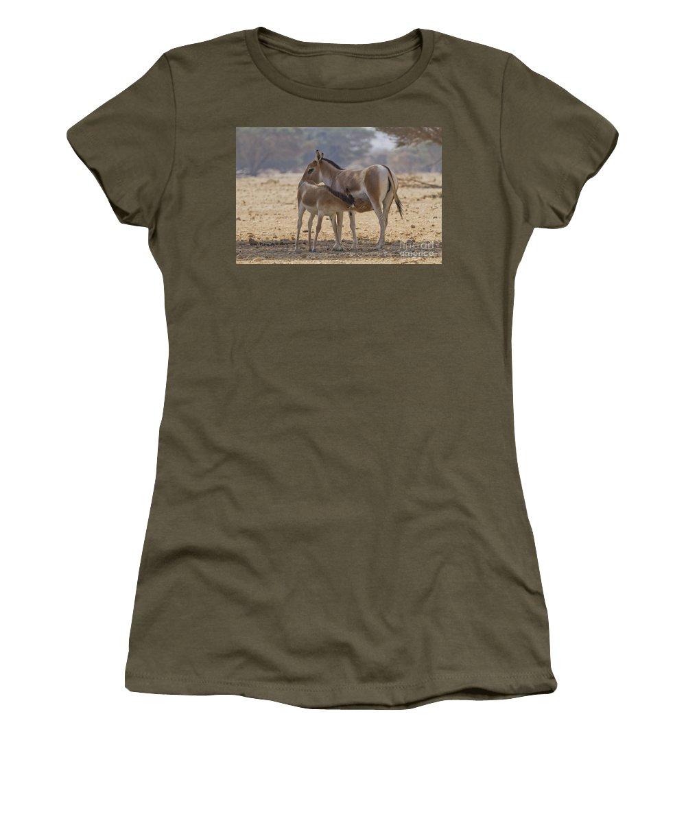 Equus Hemionus Women's T-Shirt featuring the photograph Onager Equus Hemionus 2 by Eyal Bartov