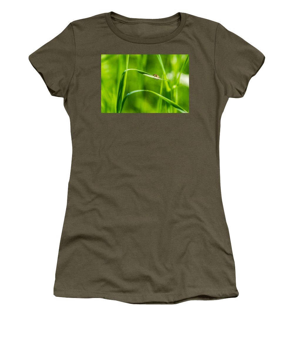 Animal Women's T-Shirt featuring the photograph Oops Ooover-load - Featured 2 by Alexander Senin