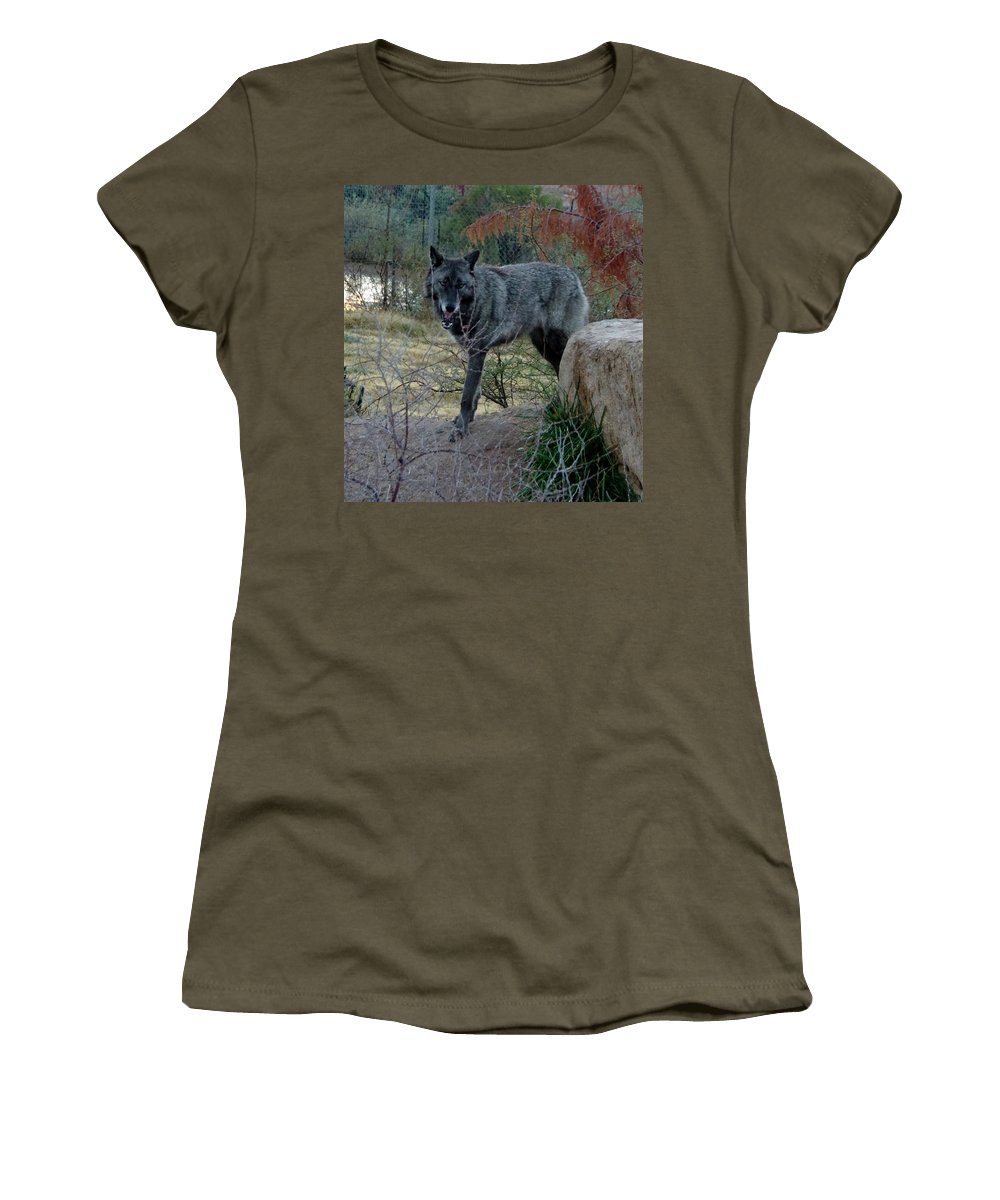 Out Of Africa Women's T-Shirt featuring the photograph Out Of Africa Black Wolf by Phyllis Spoor