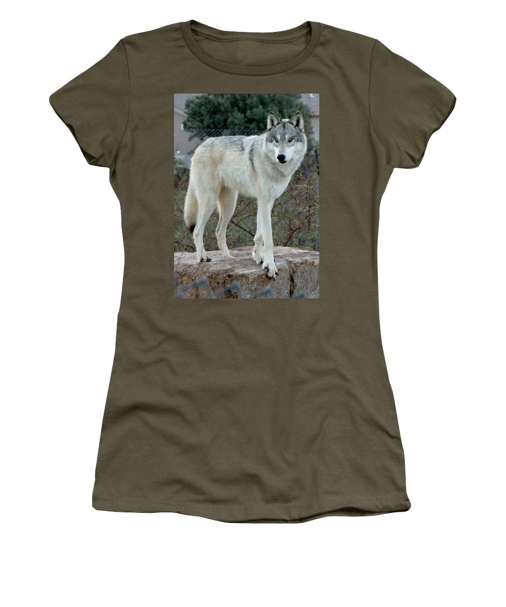 Out Of Africa Women's T-Shirt featuring the photograph Out Of Africa Wolf by Phyllis Spoor