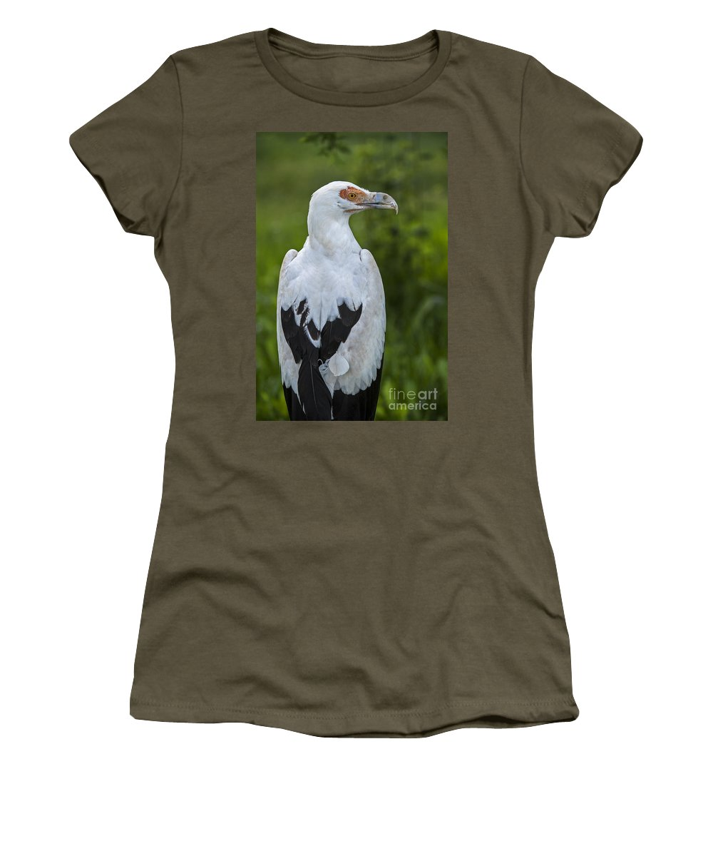 Palm-nut Vulture Women's T-Shirt featuring the photograph Palm-nut Vulture 2 by Arterra Picture Library