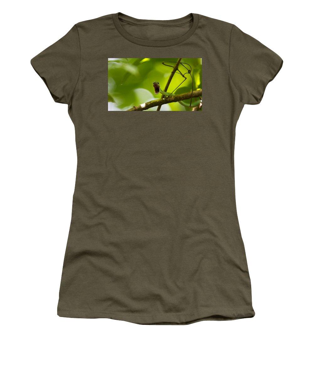 Honduras Women's T-Shirt featuring the photograph Panacam Green Snake by David Beebe