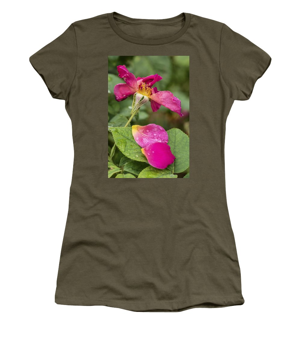 Rose Women's T-Shirt featuring the photograph Pink Rose And Its Petals by Vishwanath Bhat