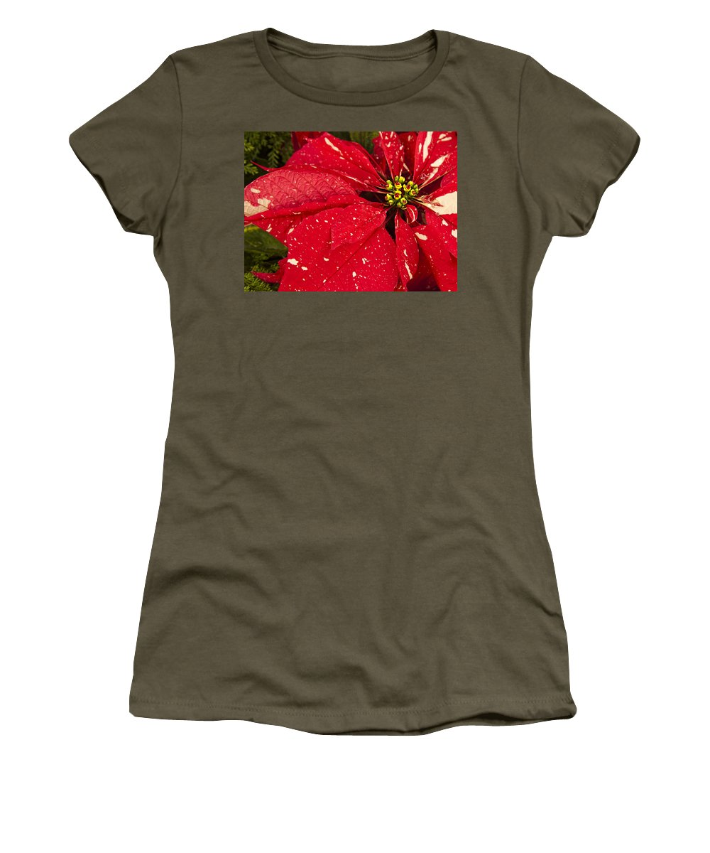 Poinsettia Women's T-Shirt featuring the photograph Poinsettia by Phyllis Taylor