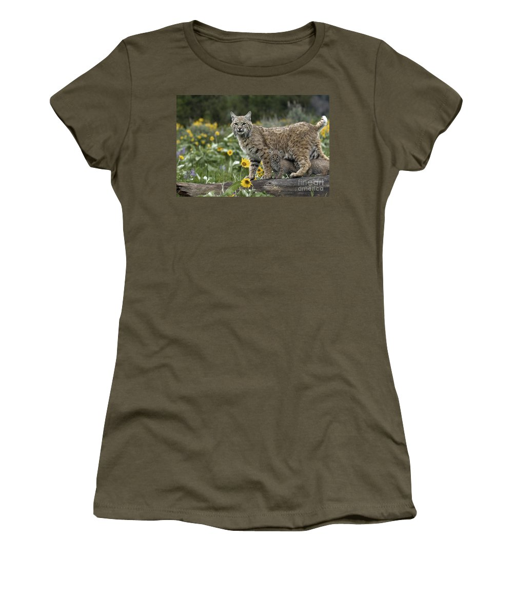 Bobcat And Kittens Women's T-Shirt featuring the photograph Protection by Wildlife Fine Art