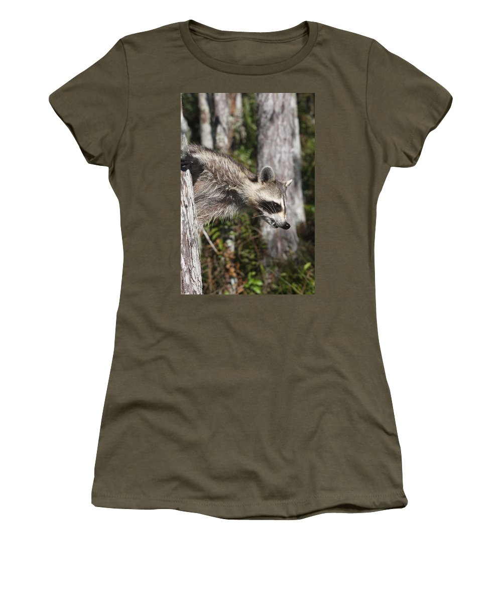 Raccoon Women's T-Shirt featuring the photograph Raccoon by Christiane Schulze Art And Photography