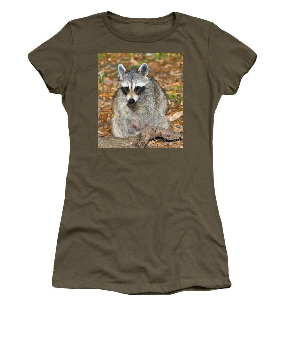 Fauna Women's T-Shirt featuring the photograph Raccoon Procyon Lotor Adult Foraging by Millard H. Sharp
