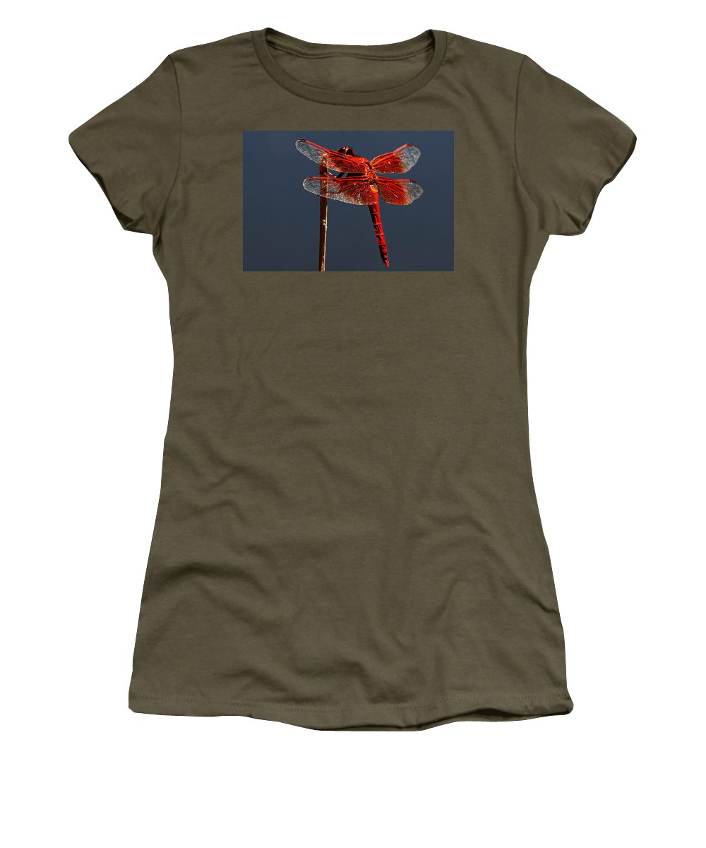 Dragonfly Women's T-Shirt featuring the photograph Red Dragon by Robert Woodward