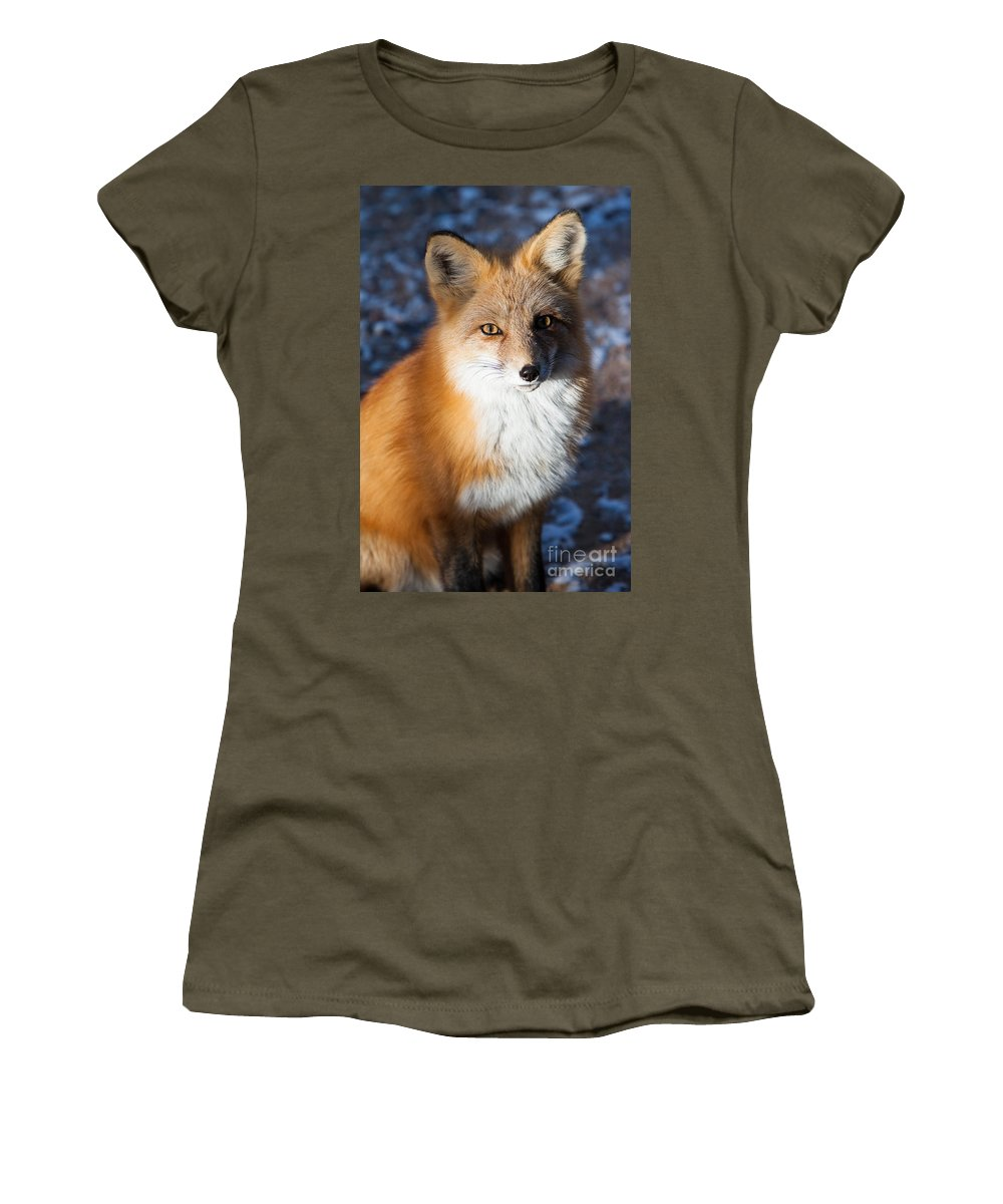 Animal Women's T-Shirt (Athletic Fit) featuring the photograph Red Fox Standing by John Wadleigh