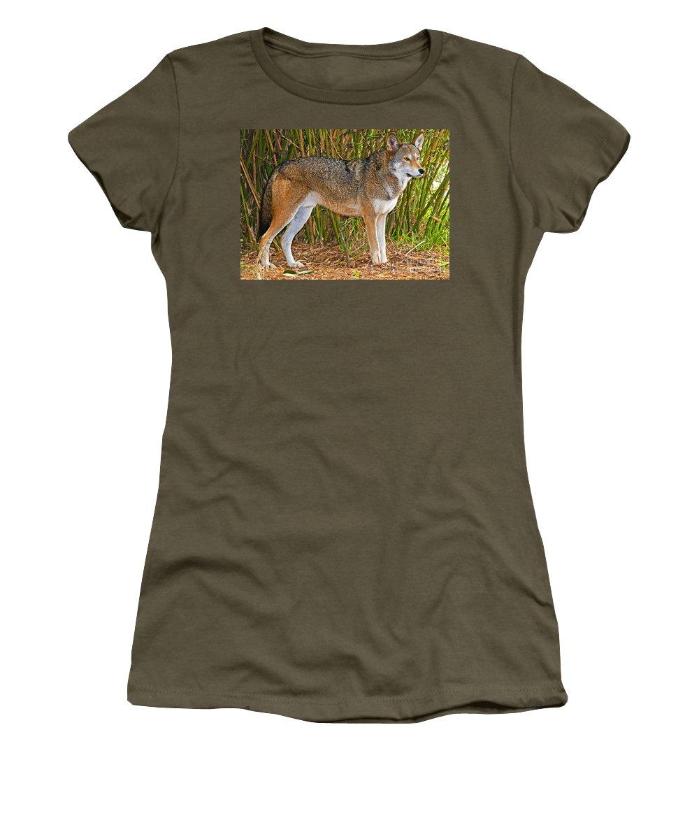 Nature Women's T-Shirt featuring the photograph Red Wolf by Millard H. Sharp